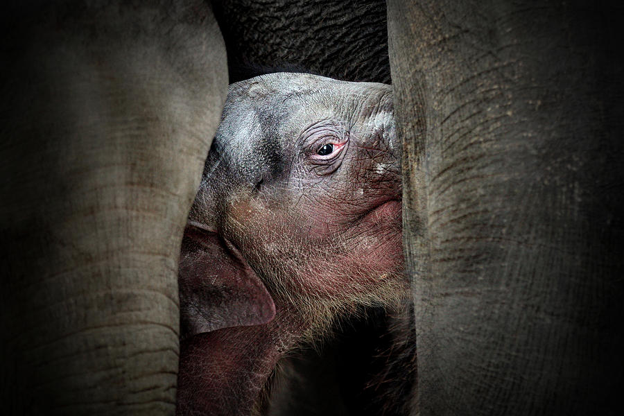 Animals Photograph - The Immemorial Knowledge Of The Newborns by Antje Wenner-braun