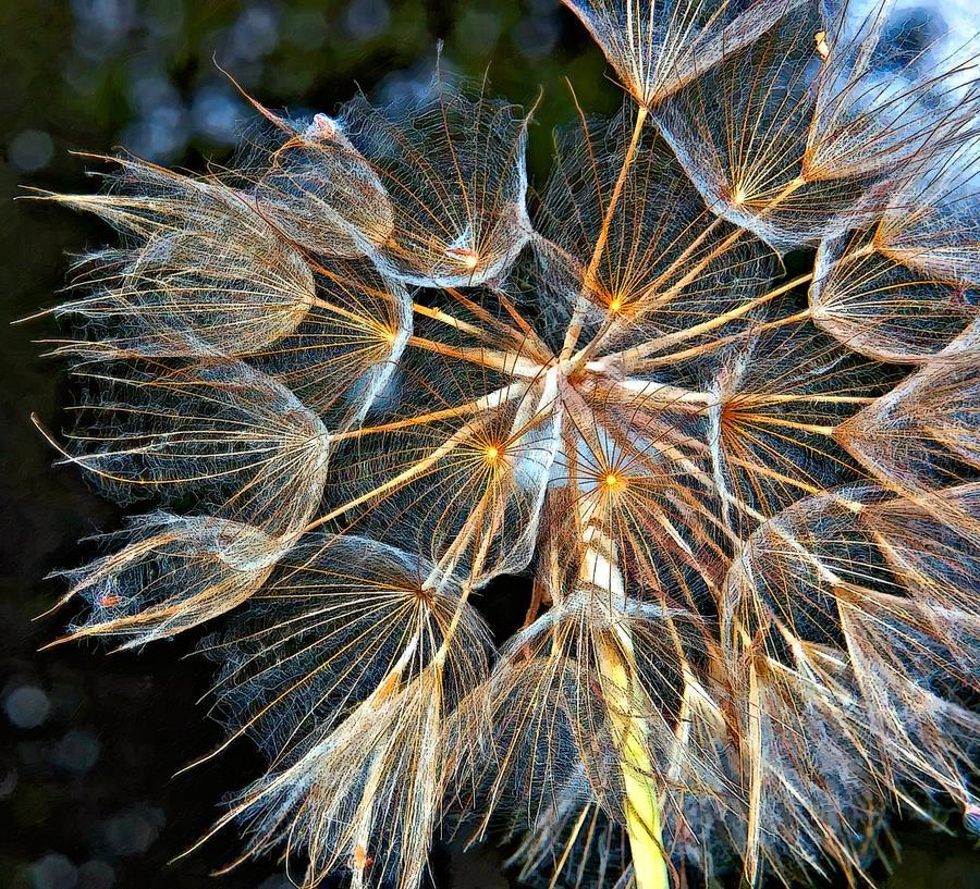 Weed Photograph - The Inner Weed Oil by Steve Harrington