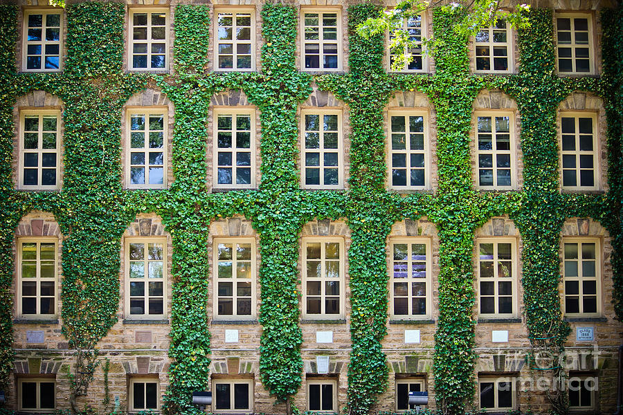 The Ivy Walls by Colleen Kammerer