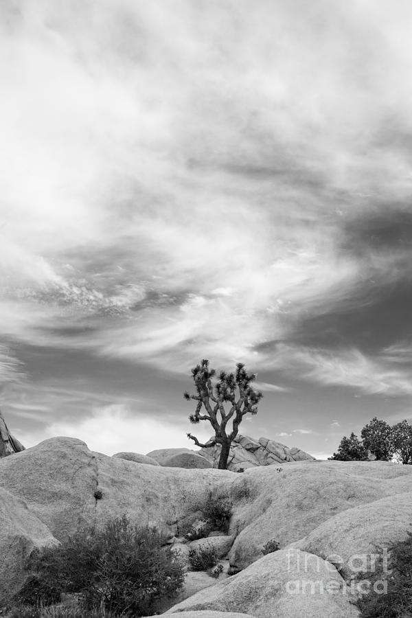 The Joshua Tree Photograph