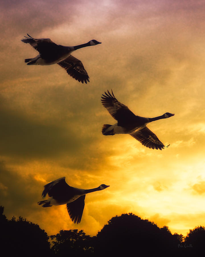 Geese Photograph - The Journey South by Bob Orsillo
