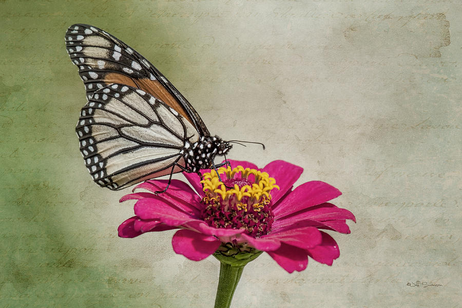 Butterfly Photograph - The Joy Of A Butterfly by Jeff Swanson