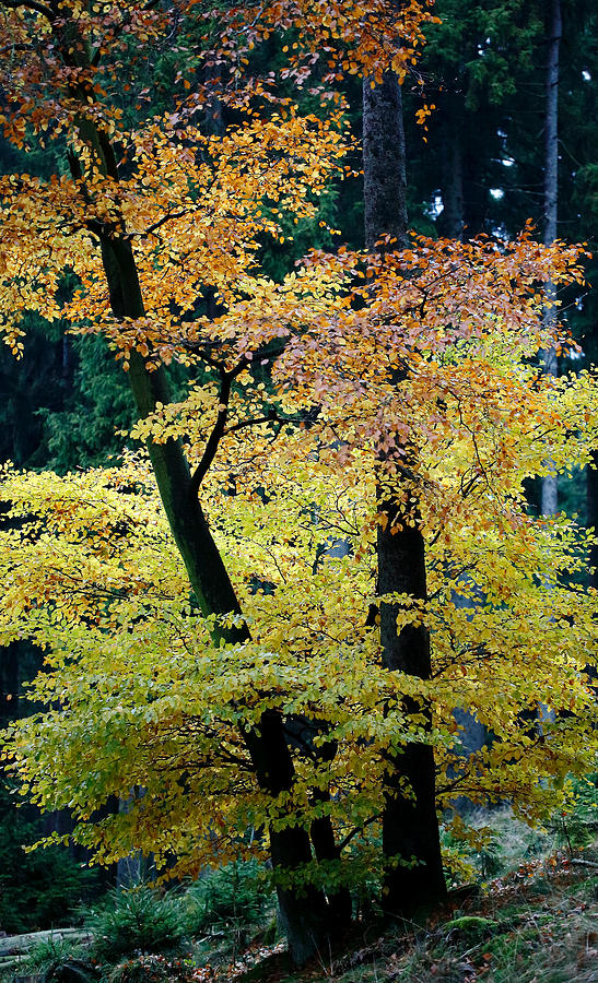 Autumn Photograph - The Joy Of Being In Autumn by Mah FineArt