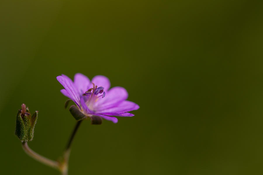 Nature Photograph - The Junior Is On The Way  by Andreas Levi