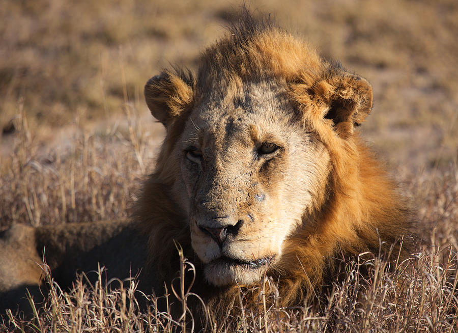 Africa Photograph - The King by Craig Brown