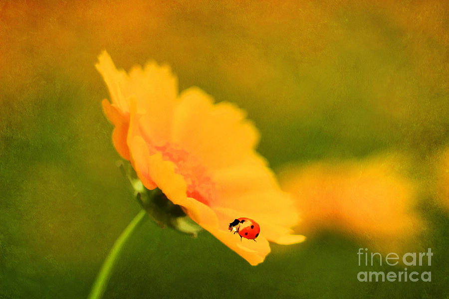 Texture Photograph - The Lady Bug by Darren Fisher