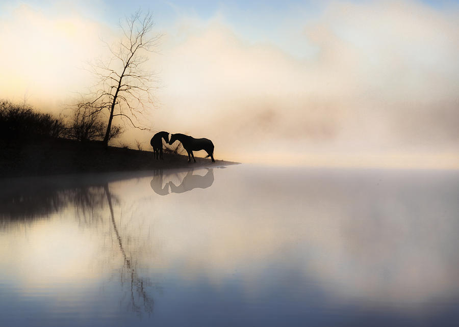 Equine Photograph - The Lake Shore by Ron  McGinnis