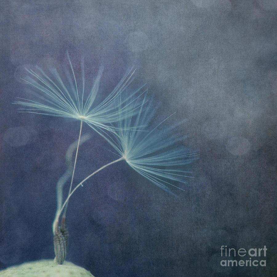 Dandelion Photograph - The Last Dance by Priska Wettstein