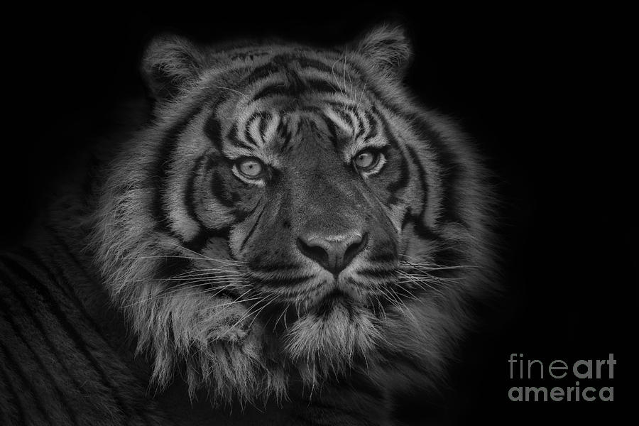 Apex Predator Photograph - The Last Indonesian by Ashley Vincent