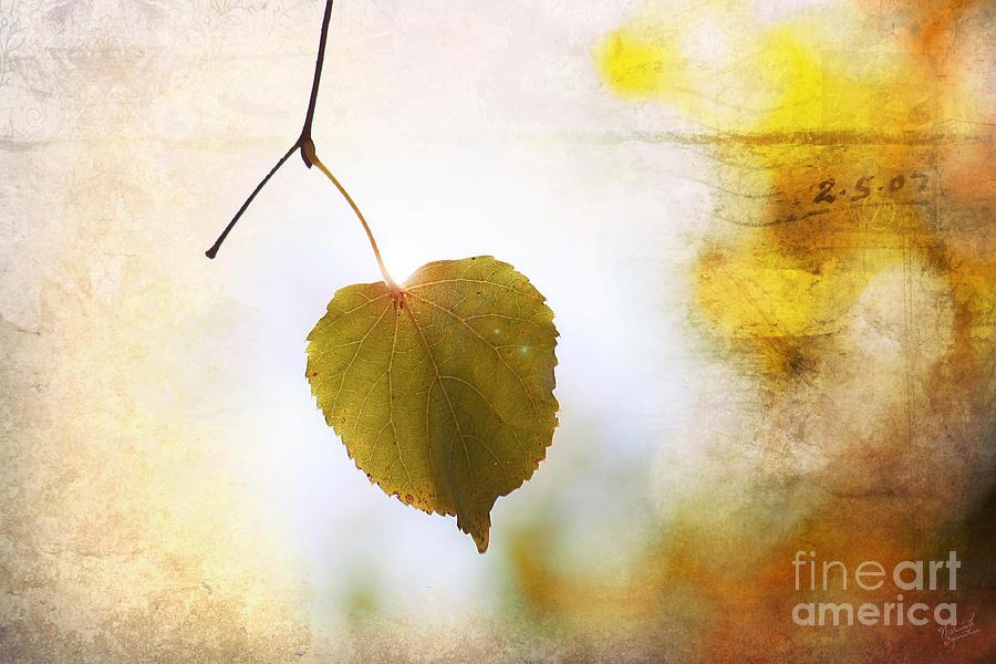 Single Autumn Leaf Photograph - The Last Leaf by Nishanth Gopinathan