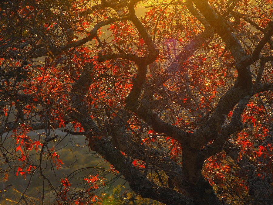 The Last Leaves On The Tree Photograph by Rebecca Cearley