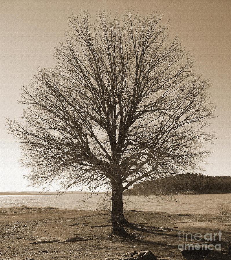 Oak Photograph - The Last Oak by R McLellan