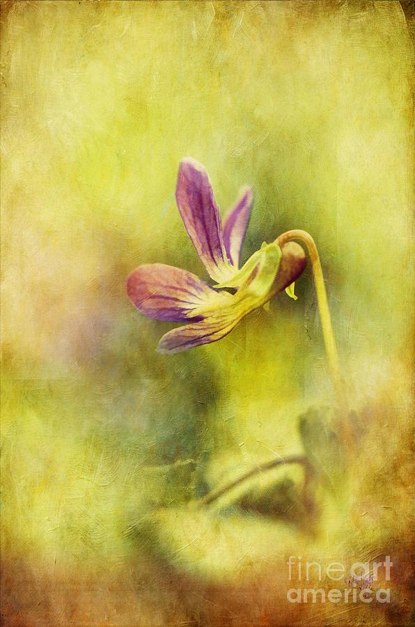 Violet Photograph - The Last Violet by Lois Bryan