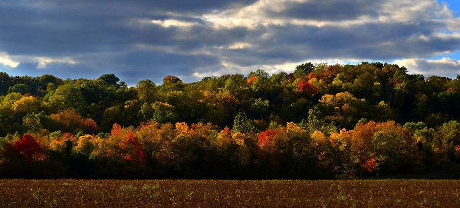 Autumn Photograph - The Layers Of Autumn by Julie Dant