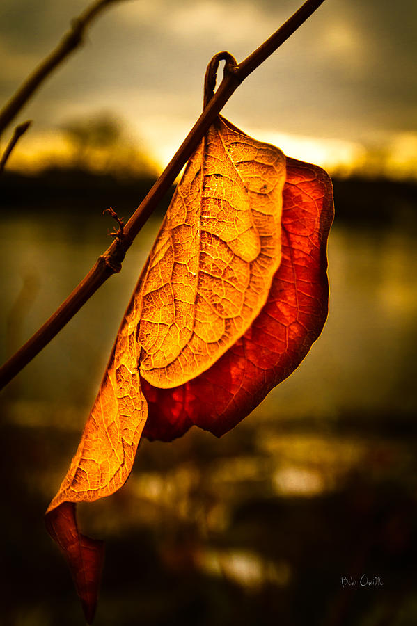 Leaf Photograph - The Leaf Across The River by Bob Orsillo