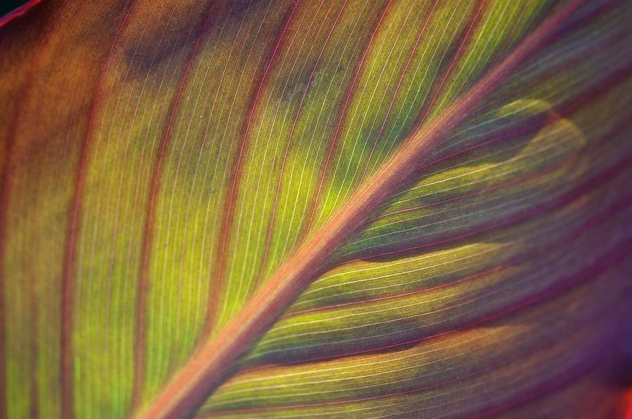 Leaf Photograph - The Leaf No. 2 by Richard Cummings