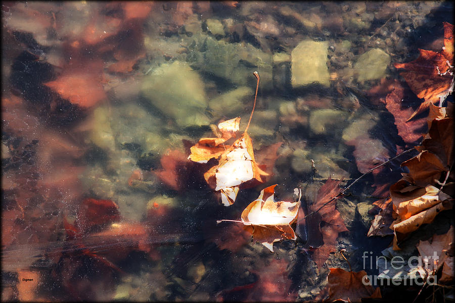 Winter Photograph - The Leaves Of Winter  by Steven Digman
