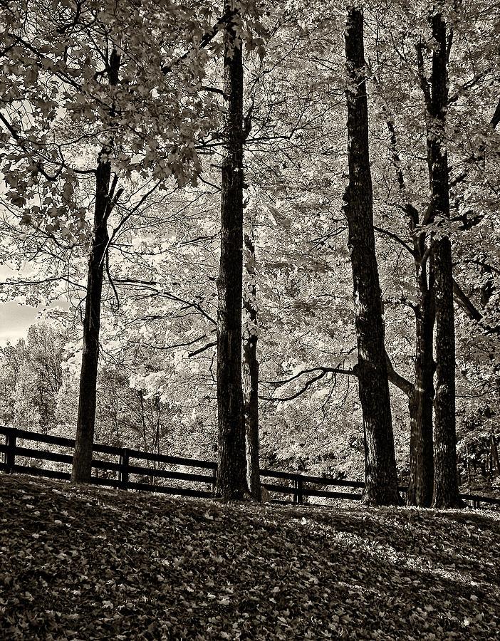 Woods Photograph - The Less Traveled Sepia by Steve Harrington