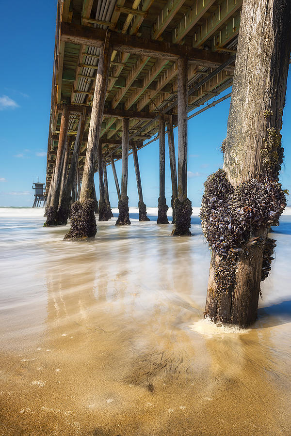 Barnacle Photograph - The Life Of A Barnacle by Ryan Manuel