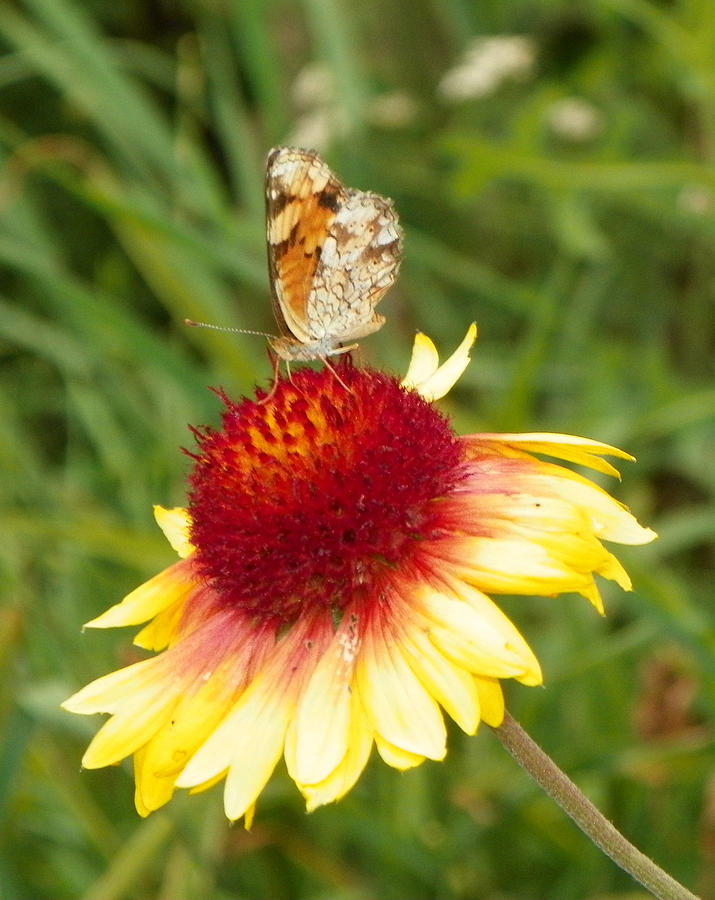 Flower Photograph - The Life Of A Butterfly by Margaret  Slaugh
