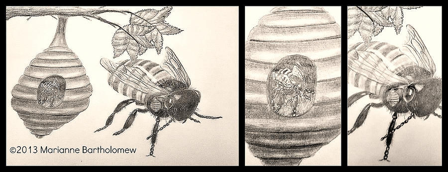 Bee Drawing - The Life Of The Bee by Marianne Bartholomew