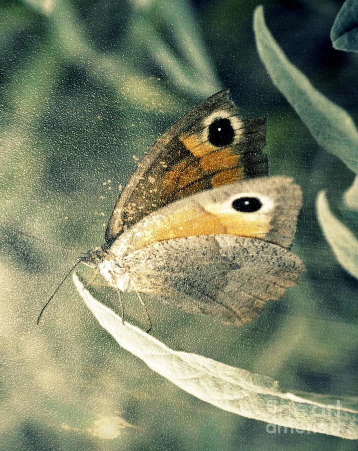 Butterfly Photograph - The Light Inside by Ioanna Papanikolaou