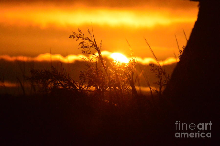 Sun Photograph - The Light Shines by Sheldon Blackwell