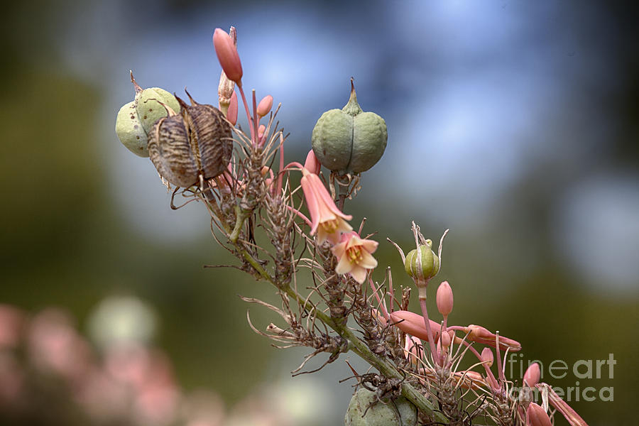 Seeds Photograph - The Little Things In Life by Douglas Barnard
