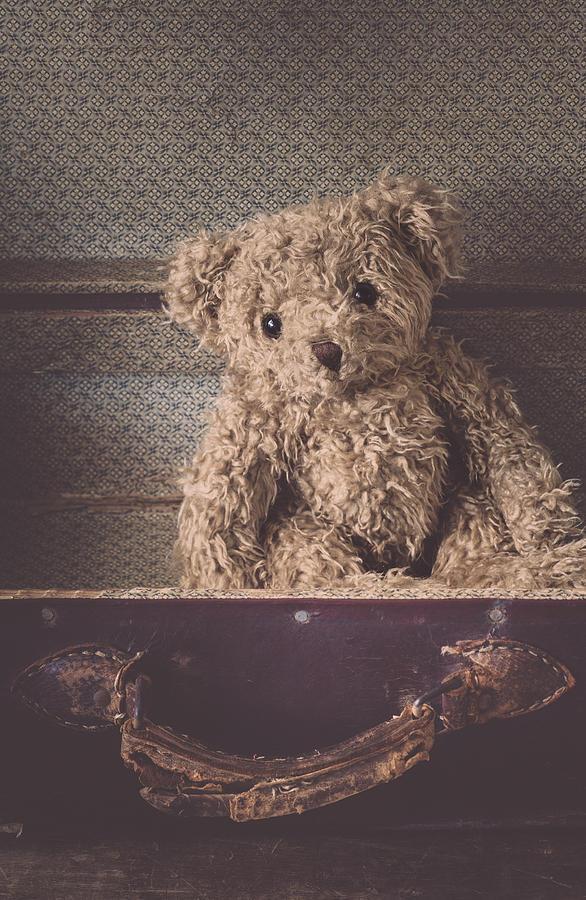 Bear Photograph - The Little Vagabond by Amy Weiss