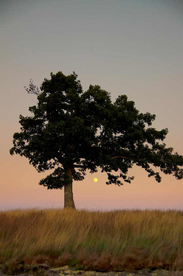 The Lone Tree at Doughton Park by John Harmon
