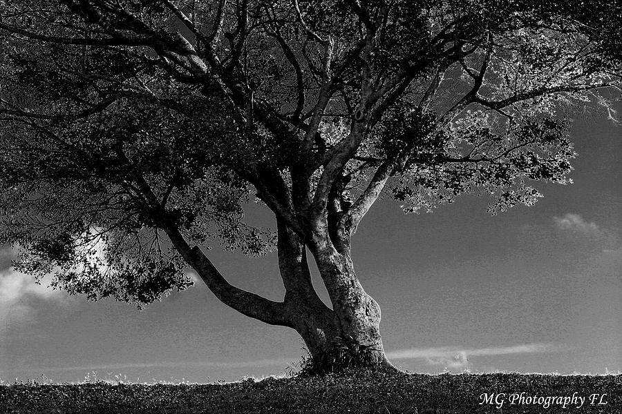 Tree Photograph - The Lone Tree Black and White by Marty Gayler