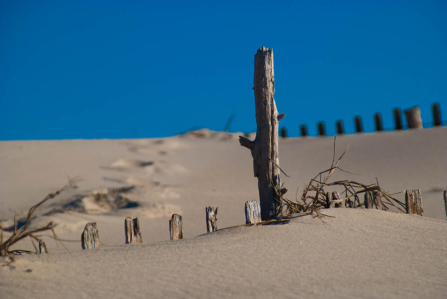 Sand Photograph - The Lonely Driftwood by Trish Tritz