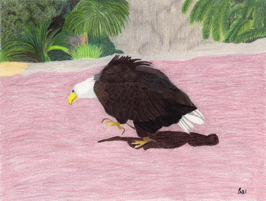 American Pastel - The Lonely Eagle by Bav Patel