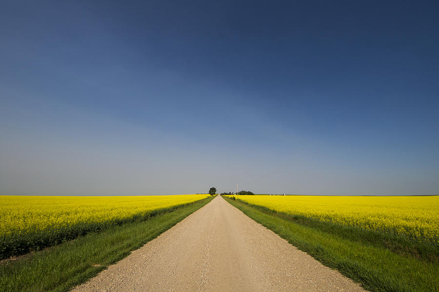 Alberta Photograph - The Long Road by Windy Corduroy