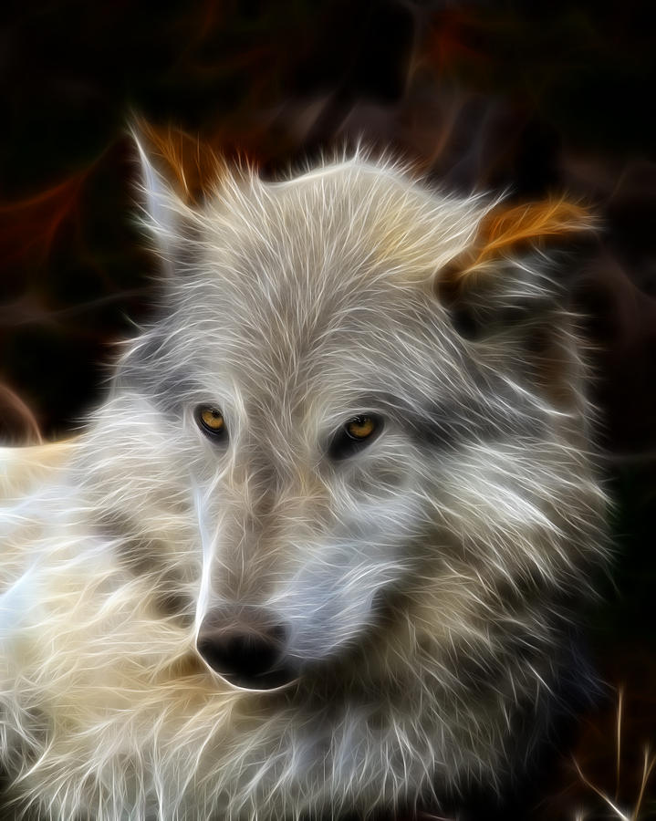 Wolf Photograph - The Look by Steve McKinzie