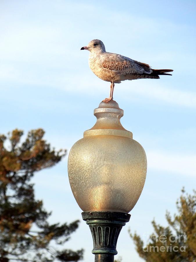 Bird Photograph - The Lookout by Ed Weidman