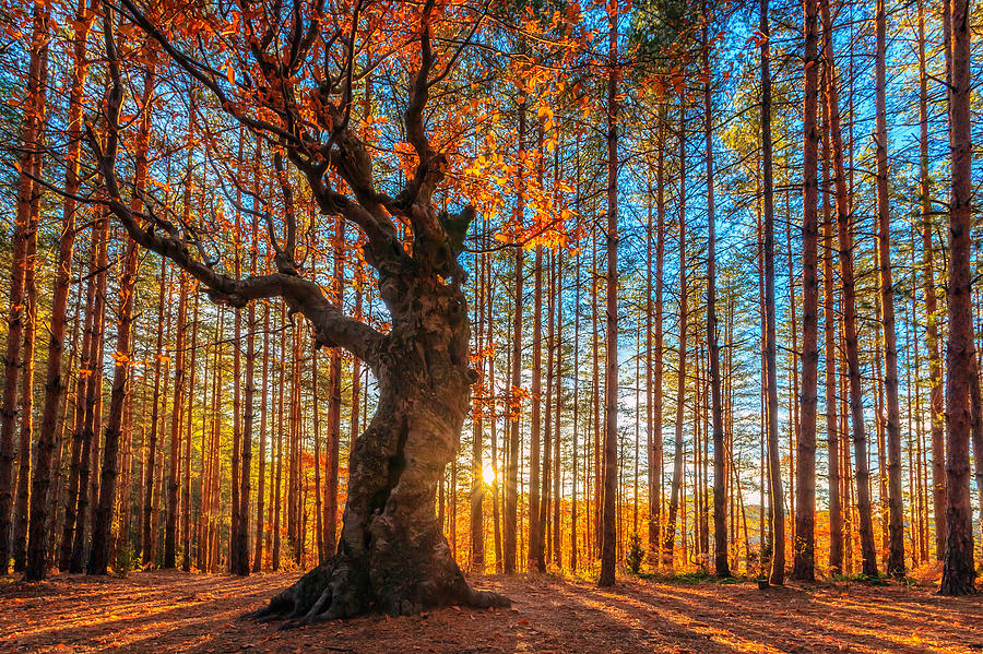 Belintash Photograph - The Lord Of The Trees by Evgeni Dinev