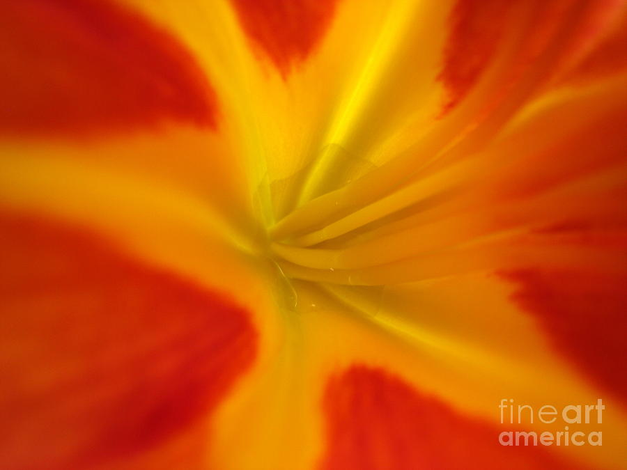Flowers Photograph - The Lords Canvas by Jennifer E Doll