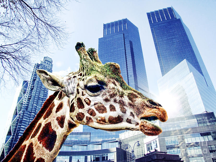 The Lost Giraffe Photograph