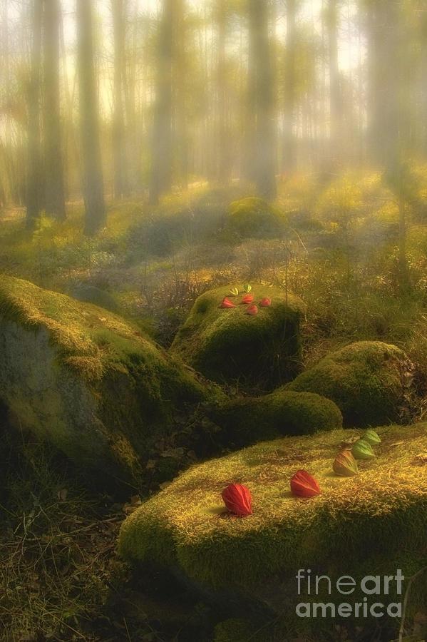 Art Work Photograph - The Magic Forest by Veikko Suikkanen