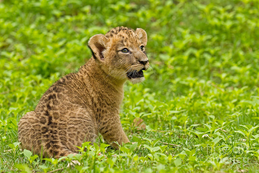 Adorable Photograph - The Markings Of Youth by Ashley Vincent