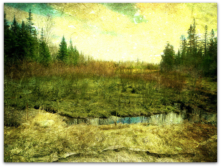 Nature Marshland Trees Brush Water Greenery Plants Textures  Photograph - The Marshland  by Dianne  Lacourciere