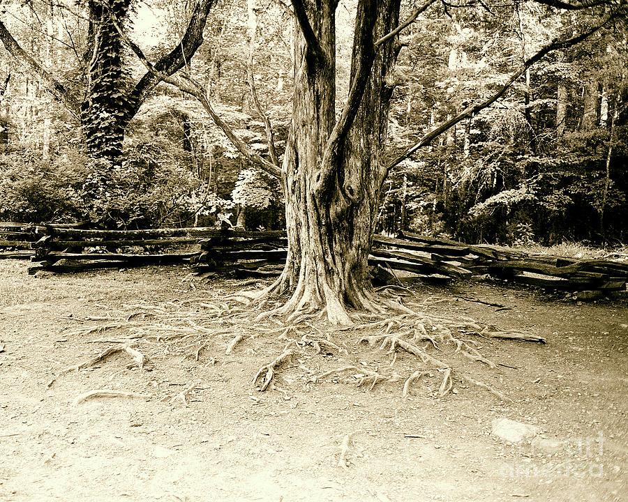 Tree Photograph - The Matriarch by Scott Pellegrin
