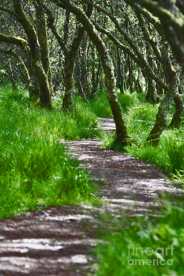 Path Photograph - The Meandering Path by Lynne Sutherland