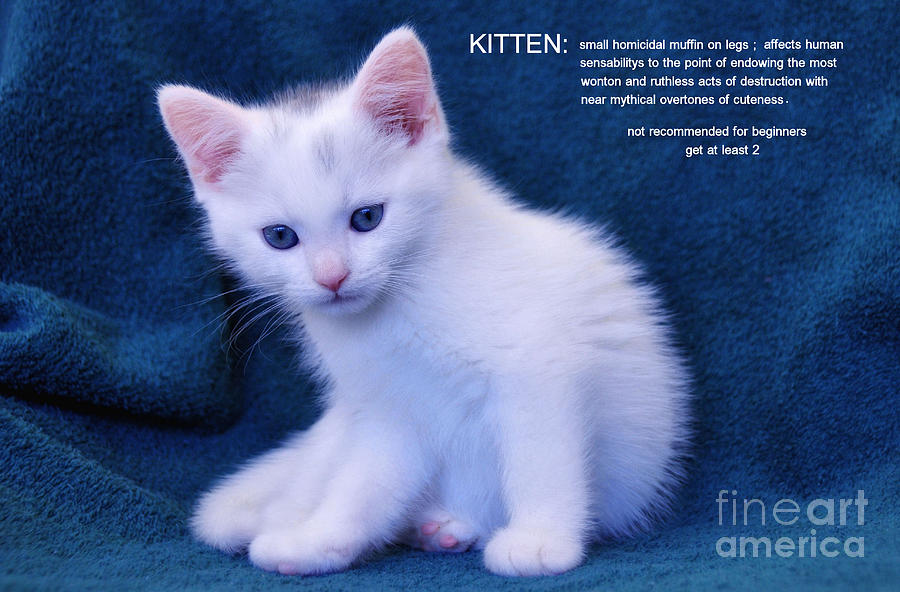 Cat Photograph - The Meaning Of A Kitten by Elaine Manley