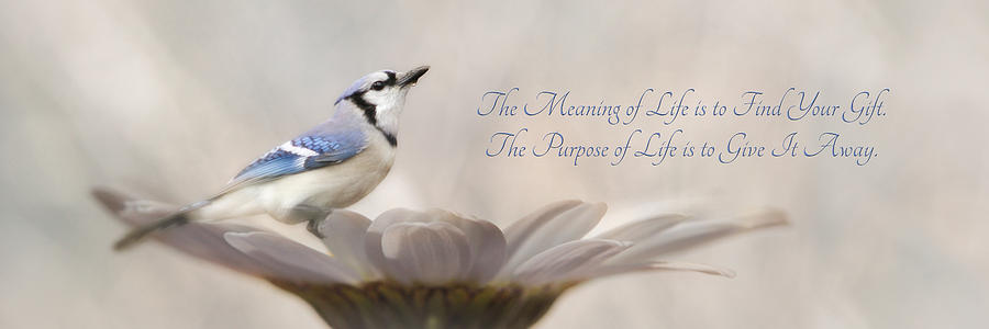 Blue Photograph - The Meaning Of Life by Lori Deiter