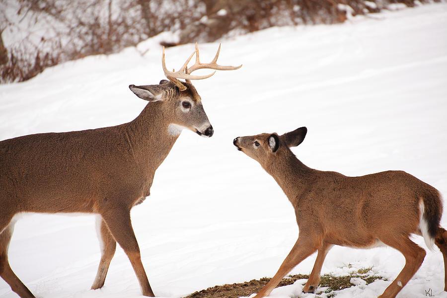 Buck Photograph - The Meet by Karol Livote