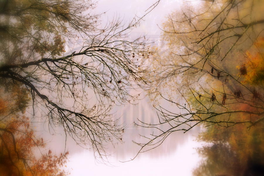 Tree Photograph - The Meeting by Michelle Ayn Potter