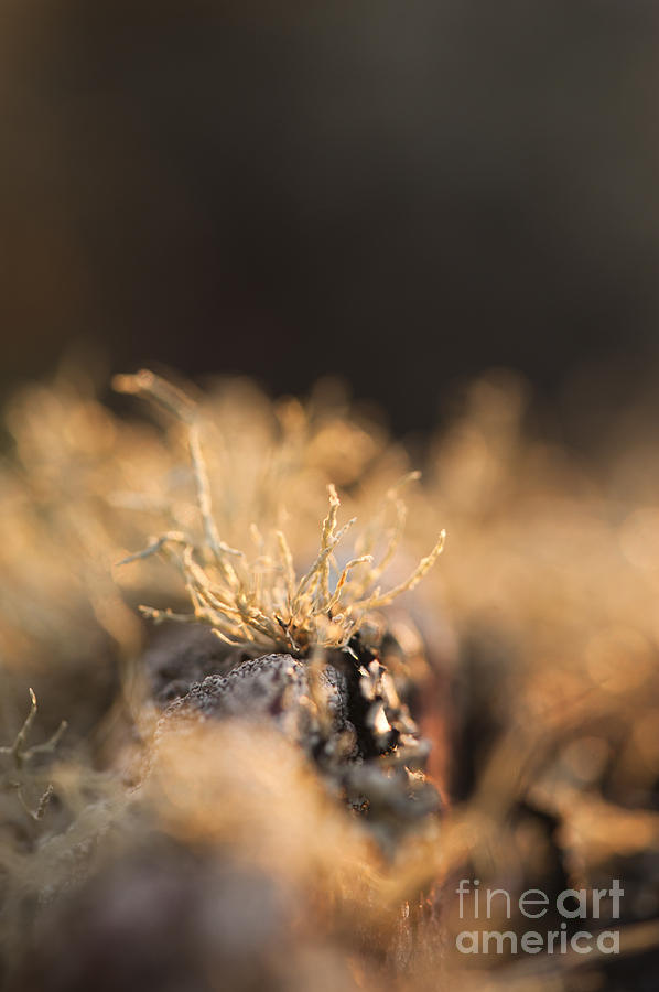 Abstract Photograph - The Miniature World Of Lichen by Anne Gilbert