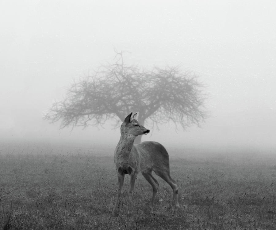 The Mist Photograph by Nicolas Piñera Martinez
